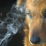 2nd Hand Smoke and Dogs
